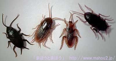 ゴキブリの画像 p1_6